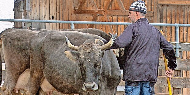 Jetzt spricht der Kuh-Bauer