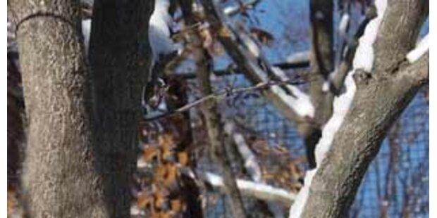 51-Jähriger von Baum gestürzt und getötet