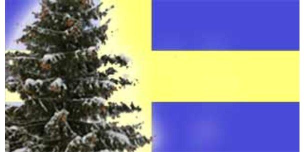 Schwedische Fichte ist fast 10.000 Jahre alt