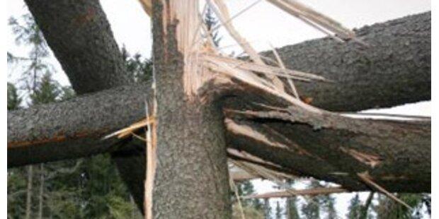 Oberösterreicher von Baum erschlagen