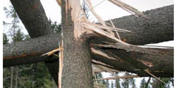 30-jähriger Arbeiter von Baum erschlagen