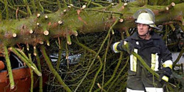 30 Meter hoher Baum stürzte auf Haus