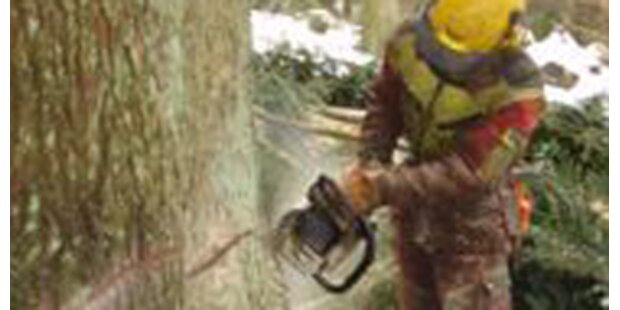 76-Jähriger starb beim Baumfällen