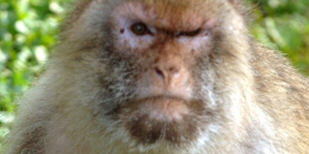 Affe beißt kleines Mädchen