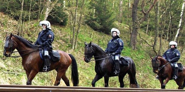 NÖ: Polizeipferd stürzt bei Fototermin - Reiterin verletzt