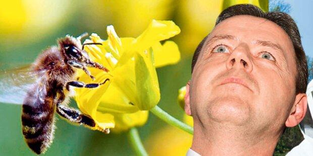 EU rettet Bienen: Minister blamiert