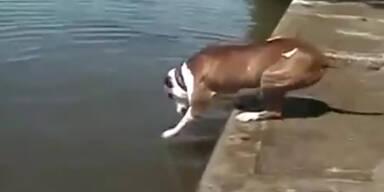 Fleißiger Hund versteht die Welt nicht mehr