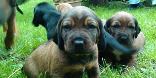 Hundebaby starb an vergiftetem Köder