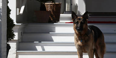 Bidens Hund Major bekommt jetzt 'First-Dog'-Unterricht