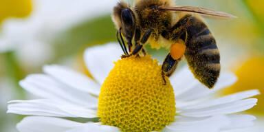 EU verbietet Pestizide ab Dezember
