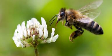 Die 5 häufigsten Insektenstiche