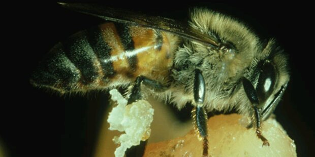 2,4 Mio. Euro gegen Bienensterben