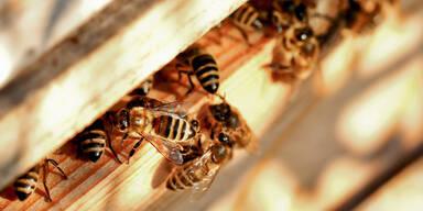 Ein Zuhause für Bienen