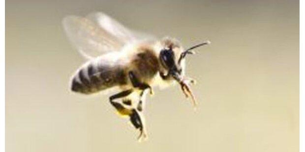 Biene verursacht Verkehrsunfall