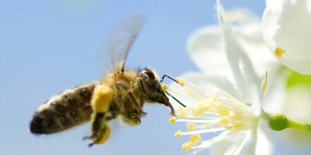 Grüne kritisieren Bienentod-Forschung