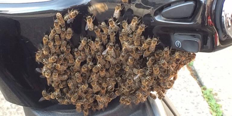 Bienen-Alarm vor dem Lebensministerium
