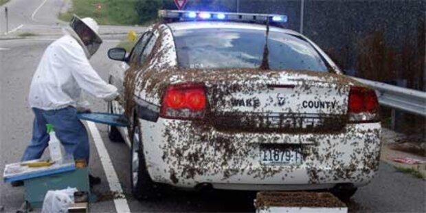 50.000 Bienen halten Polizisten gefangen