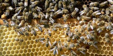 Erste Prognosen vom Bienenzüchter