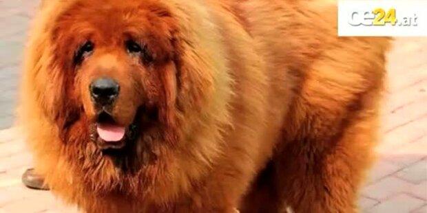 Teuerster Hund für 1,1 Mio. € verkauft