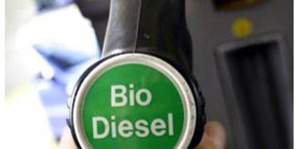 Biodiesel schluckt 7 Prozent der Pflanzenölernte