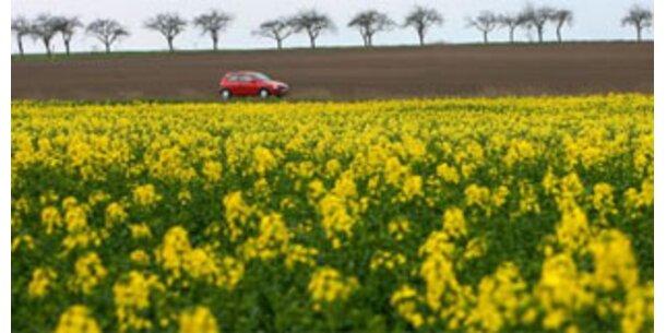 Biosprit macht Lebensmittel teurer