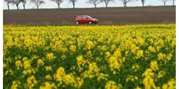 Weiter kein Erfolg mit Biodiesel