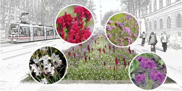 WienerInnen wählen Blumenbeet-Farben