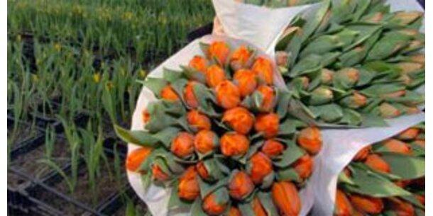 Holland Blumen Mark wird österreichisch