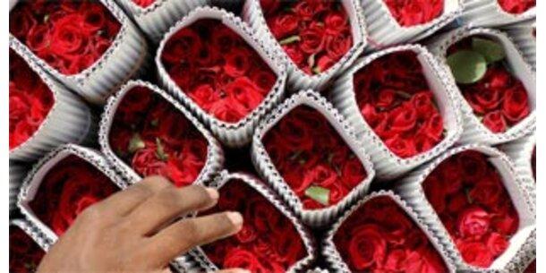 Österreicher schenken 20 Millionen Blumen