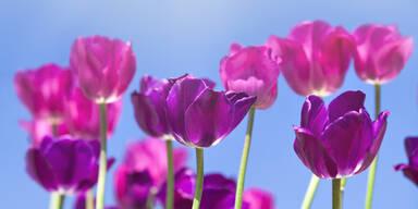 Endlich ist es so weit: Der Frühling ist da