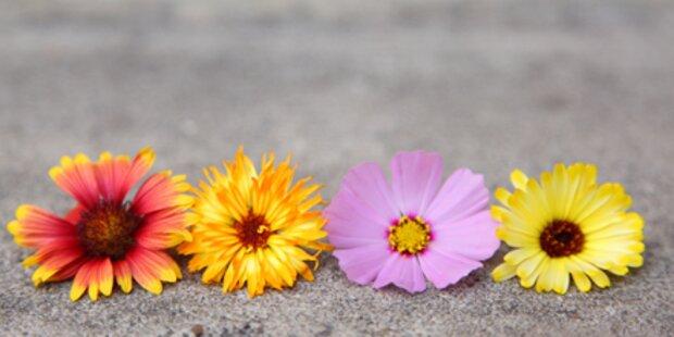 Blumensprache: Sagen Sie es durch die Blume