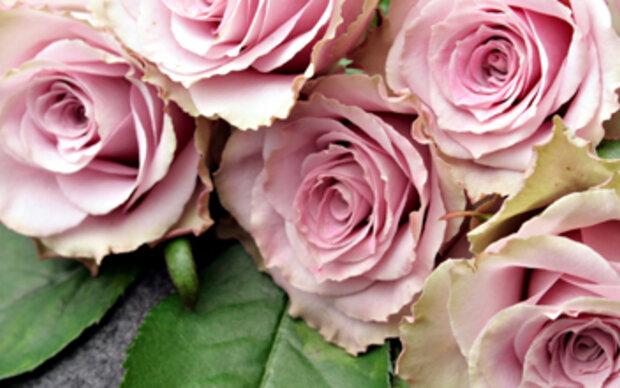 Ihr Blumen Horoskop