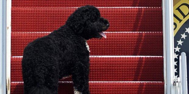 Kein zweiter Hund für Obamas Töchter