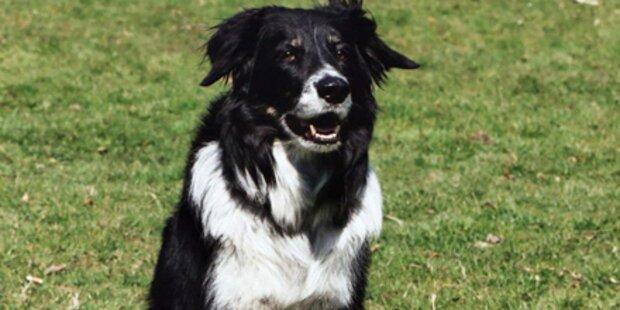 80 Hunde-Attacken auf Kinder
