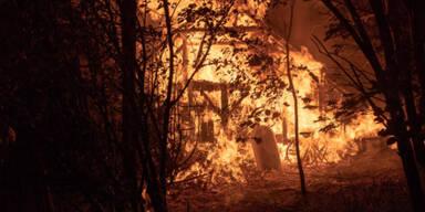Stall-Brand in OÖ: Mehr als 100 Hühner verbrannt