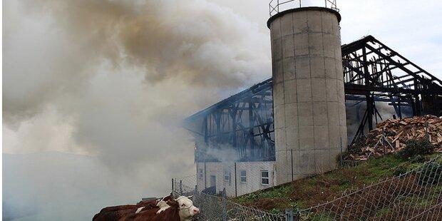 Tiere aus Flammen-Inferno gerettet