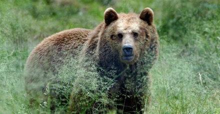 Die Bären sind wach