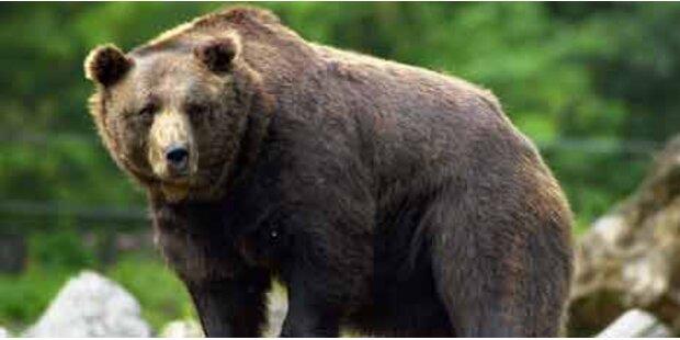 Rätsel um Bären im Oberland