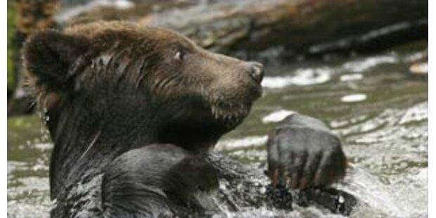Bär tötet Beerensammler in Russland