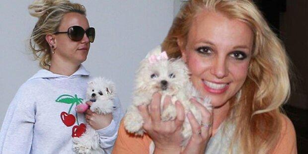 Ersatzbefriedigung: Spears hortet Haustiere
