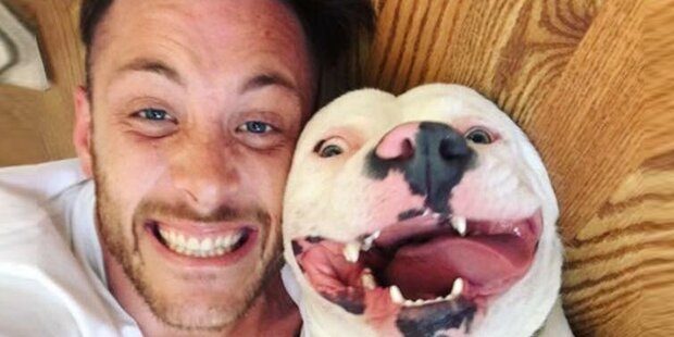 Dieses Foto tötete beinahe Bulldogge