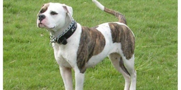 Kölner Gericht rief Bulldogge in den Zeugenstand
