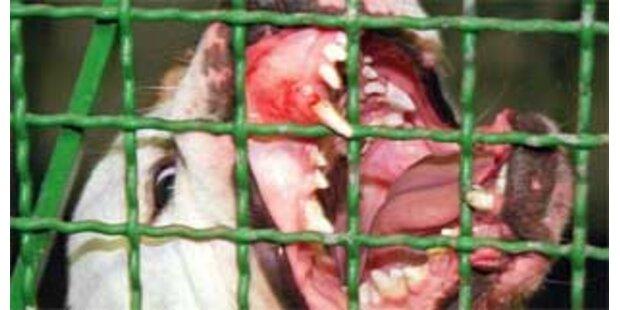 Bullterrier beißt Kärntner Tierpflegerin ins Bein