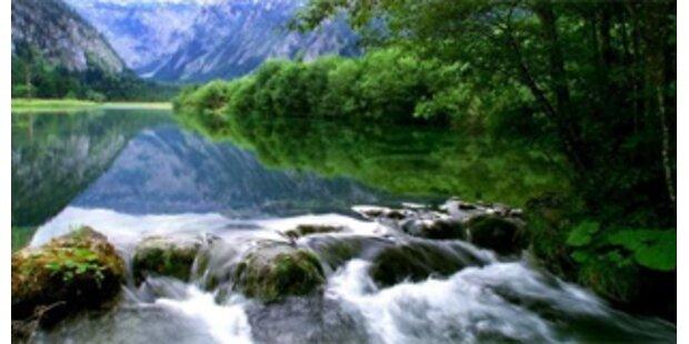 Suche: Österreichs schönster Wald