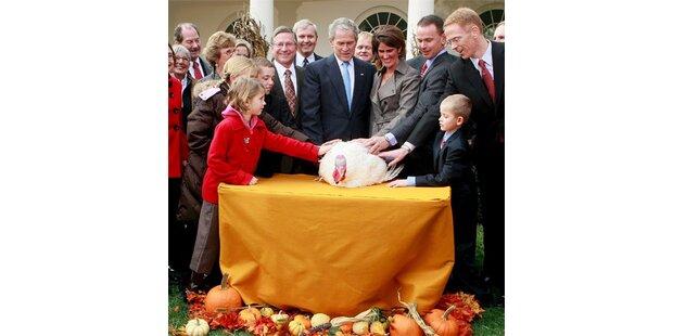 Bush begnadigt  zwei Truthähne