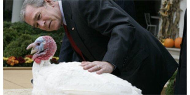 US-Präsident Bush begnadigte Truthähne