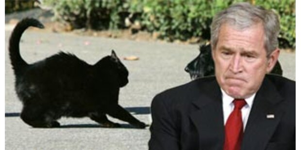 Islamisten spotten über Tod von Bushs Katze