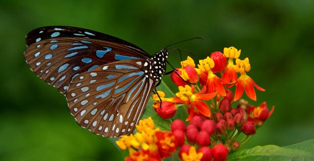 butterfly1_sxc.jpg