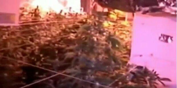 N.Y.: Riesige Cannabis Plantage entdeckt