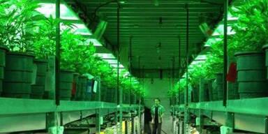 Wirbel um Cannabis-Branche in USA: Keine Konten für Verkäufer
